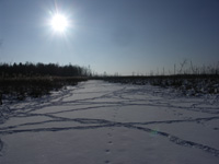 Fährten im Flussdelta
